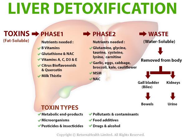 Liver-Detoxification1