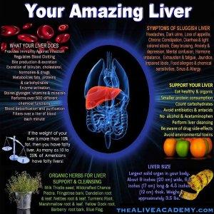 Your Amazing Liver
