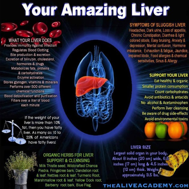Your Amazing Liver