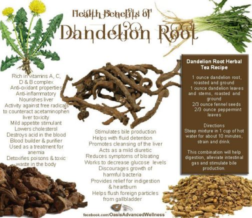 Benefits of Dandelion root (Taraxacum officinale)